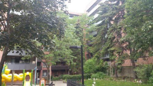Perth Avenue